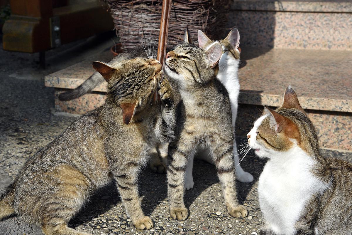 Verschmuste Katzen auf dem Hof